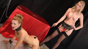 Testing Times for New PuppyGirl! – Bound Honeys Exclusive